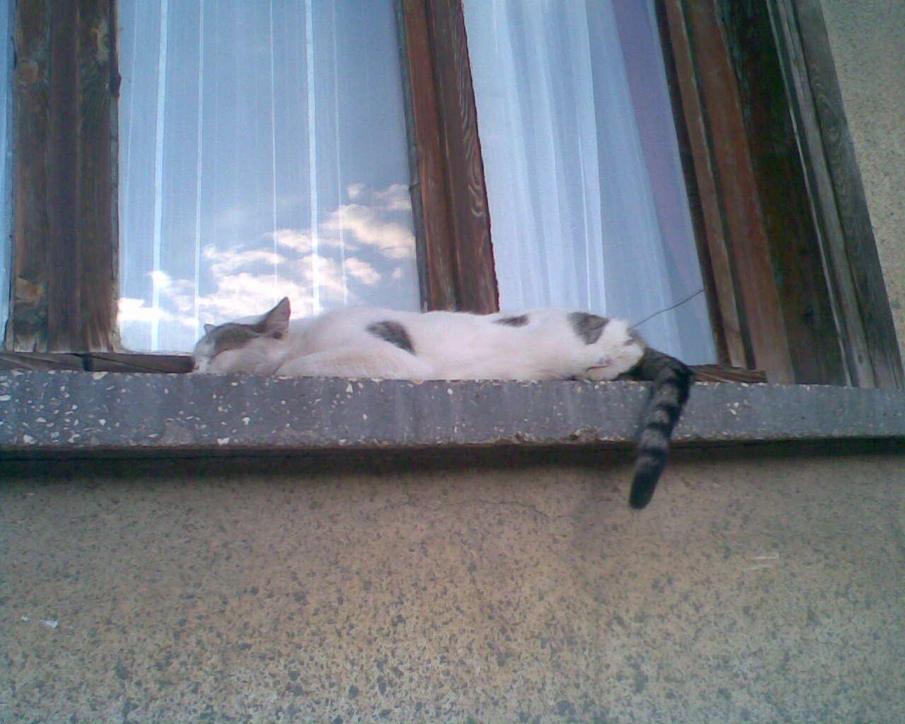flatcat.jpg