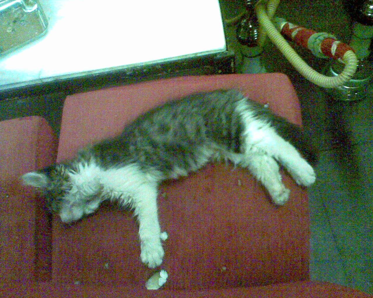 stambulo_katinukas.jpg