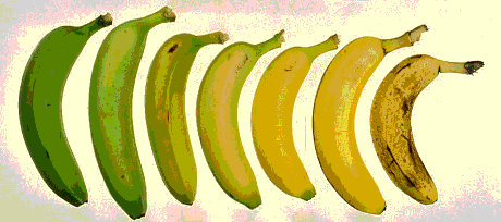 stages-of-banana3.jpg