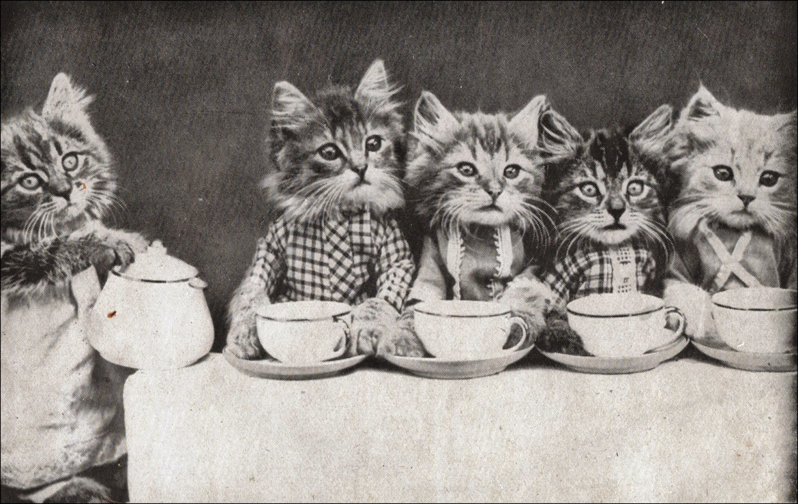 kittens-1.jpg